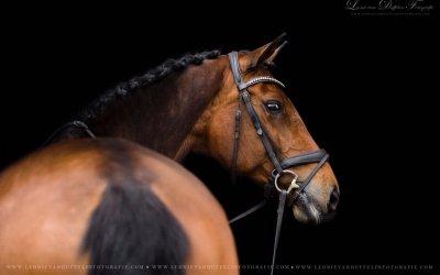 Effectief Communiceren en Paardensport